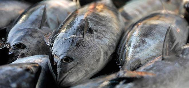 Türk balığı Meksika yolcusu